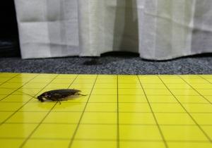 Ученые предлагают использовать тараканов-киборгов для исследования зданий