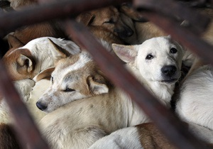 Собаки во Вьетнаме. Уже больше, чем просто блюдо на обед