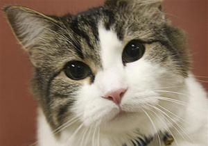 Кот - В Молдове  разоблачили  кота, проносившего в тюрьму марихуану