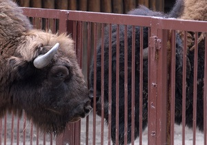 новости Киева - зоопарк - киевский зоопарк - цены - Киевский зоопарк вновь поднимет цены
