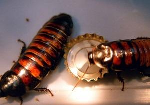 Китайские фермеры делают ставку на разведение тараканов - новости китая