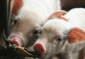 Второй крупнейший производитель свинины в США готовит экспансию в Украине - веревский - кернел