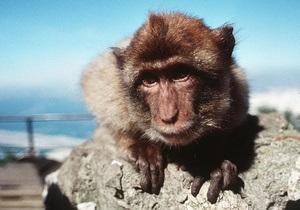 В Гибралтаре на туристов напали обезьяны