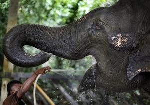 Новости науки: Слоны понимают жесты людей на уровне интуиции