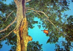 В Латвии полностью исчезли белки-летяги