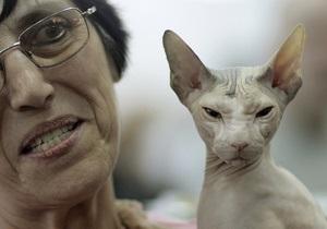 Кошки испытывают стресс, когда их гладят - ученые