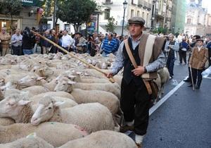 В Мадриде пастухи, протестуя против урбанизации, прогнали по городу две тысячи овец