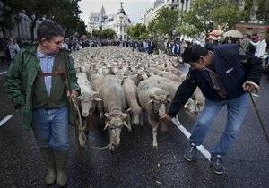 Испанские пастухи, протестуя против урбанизации, прогнали по Мадриду две тысячи овец