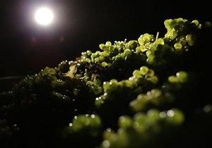 Новости Испании: Испанец погиб под пятью тоннами винограда