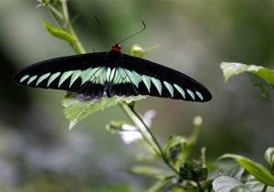 Новости науки - насекомые: Насекомые не спариваются в дождливую погоду