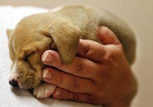Животные - живодеры - жестокое обращение с животными - DW: Почему Украина не может избавиться от живодеров