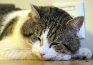 Кот - Премьер-министра Британии обвинили в том, что он не любит своего кота