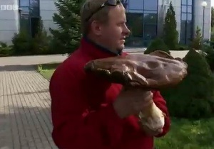 В польском лесу вырос гигантский гриб - видео