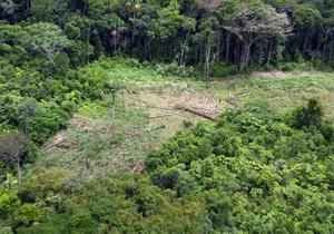 Кокаиновые плантации в Перу: ООН предоставила детальный отчет