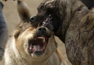 В Одессе бойцовская собака покусала пенсионерку, пострадавшая в критическом состоянии