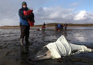Новости науки - массовая гибель животных: У побережья Никарагуа обнаружены сотни мертвых черепах, дельфинов и рыб