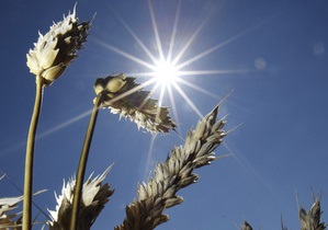 Украина стала крупнейшим поставщиком пшеницы в Южную Африку