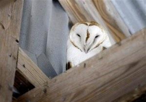 Новости Великобритании: Свадебная сова уснула на работе, оставив молодоженов без колец