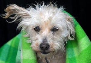 Новости США - новости о животных: В США пес случайно выстрелил в хозяйку