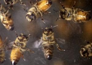 В Винницкой области пчелы до смерти искусали мужчину на собственной пасеке