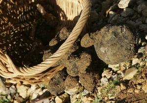 новости Винницкой области - отравление - грибы - Четыре жителя Винницкой области отравились дикими грибами