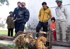 Во Вьетнаме о причастности к казни похитителей собак заявили сотни человек