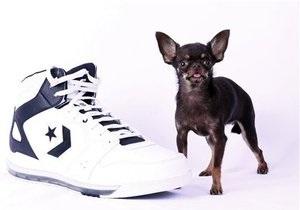Новости о животных: Волшебную Милли признали самой маленькой собакой планеты
