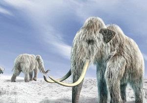Люди не виноваты в вымирании мамонтов - исследование
