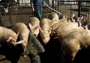 Свиная энергетика: в Украине заработал первый биогазовый завод
