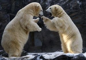 Канадца от нападения белого медведя спас телефон