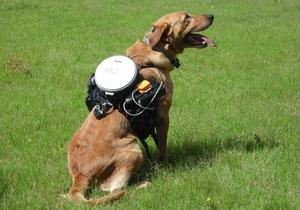 Новости науки: Разработана система дистанционного управления собаками