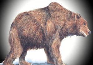 Новости науки - новости генетики: Генетикам удалось восстановить часть генома древнего медведя