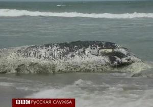 Гана: откуда берутся мертвые киты на пляжах?