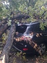 новости Киева - Парковая дорога - дерево - На Парковой дороге в Киеве дерево повредило два автомобиля, стоявших в пробке