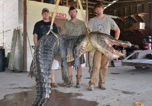 В США поймали гигантского крокодила