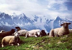 Фотограф обвинил Кадырова в воровстве снимка с овцами