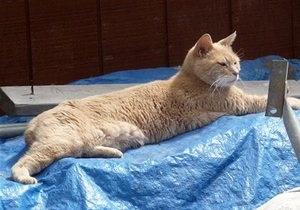 Новости США - странные новости - новости о животных: На Аляске пес напал на кота-мэра