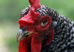 Минздрав определил, сколько влаги должна содержать курица
