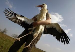 Египет - птица - В Египте полиция арестовала аиста, подозреваемого в шпионаже
