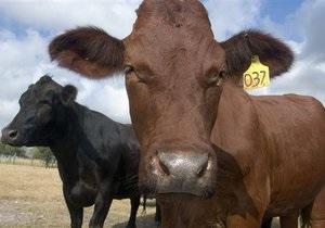 В Чехии поезд врезался в стадо коров