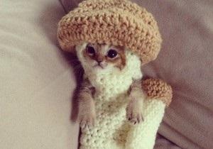 Новости Японии - новости о животных: В Японии умер котенок в костюме гриба
