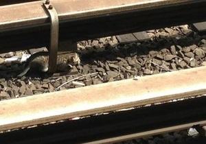 Новости США: В Нью-Йорке  на полтора часа остановили движение метро из-за котят