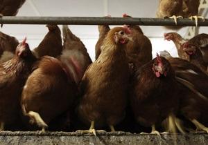 Украинский агрогигант сократил чистую прибыль почти на 50% из-за финта курятины - мироновский хлебопродукт - косюк