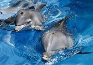 Массовая гибель дельфинов у побережья Калифорнии: ученые заподозрили вирус