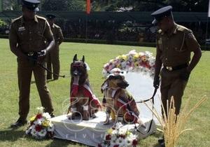Новости о животных - странные новости: На Шри-Ланке прошла массовая собачья свадьба