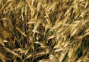 Найбільший український аграрний холдинг домігся продовження кредиту на сотні мільйонів доларів
