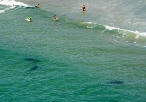 Гавайські острови - напад акули - Інцидент став сьомим нападом акули на людину за рік