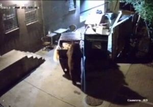 У США ведмідь крав їстівні відходи цілими контейнерами