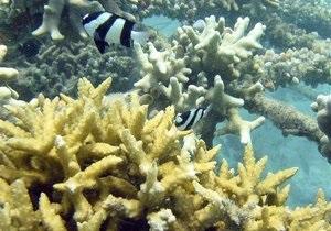 Новини науки: Біля узбережжя Балі виявили унікальний вид коралів