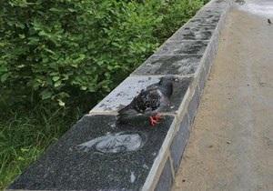 У Петрозаводську після дощу виявилося, що на вуличній плиті зображений Савелій Крамаров